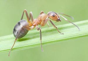 天津灭蚂蚁
