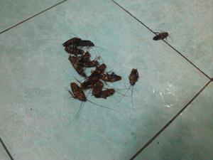 天津灭蟑螂